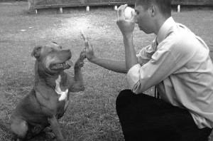 O adestrador Velasques e seu cão da raça Pitbull obedecendo ao comando de adestramento avançado TOCA!